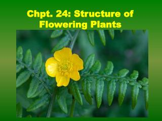 Chpt. 24: Structure of Flowering Plants