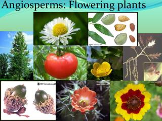 Angiosperms: Flowering plants