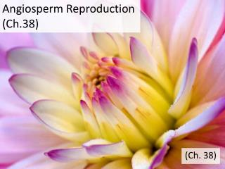 Angiosperm Reproduction (Ch.38)