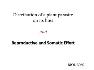 Distribution of a plant parasite  on its host  and Reproductive and Somatic Effort