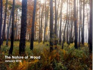 The Nature of  Wood January 2012