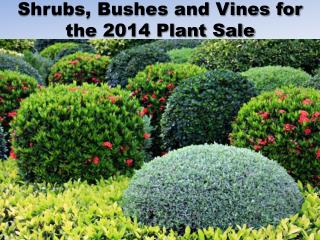 Shrubs,  Bushes  and  Vines for the 2014  Plant Sale