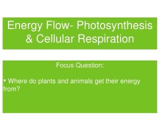 Energy Flow- Photosynthesis & Cellular Respiration