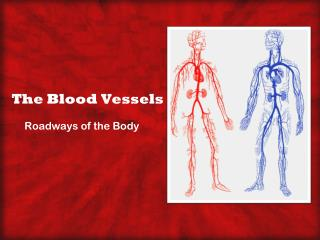 The Blood Vessels
