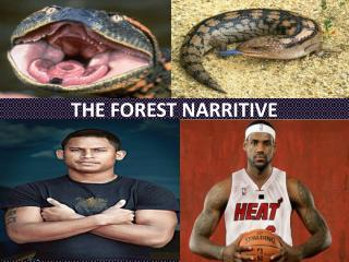 THE FOREST NARRITIVE