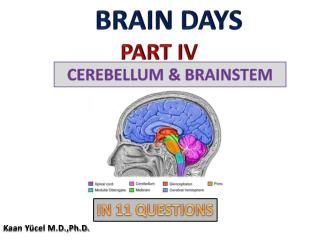 BRAIN DAYS PART IV