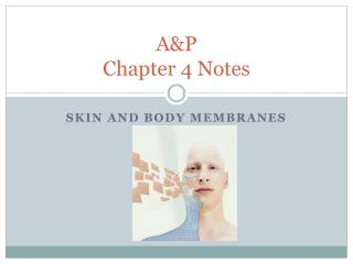 A&P Chapter 4 Notes