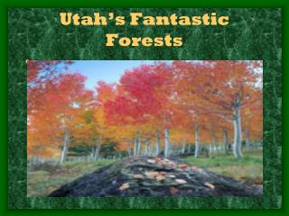Utah's Fantastic Forests