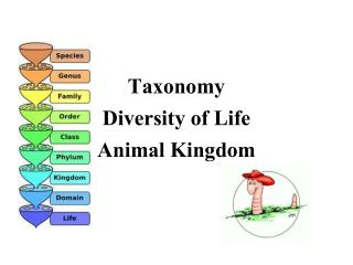 Taxonomy Diversity of Life Animal Kingdom
