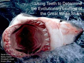 Using Teeth to Determine the Evolutionary Lineage of the Great White Shark