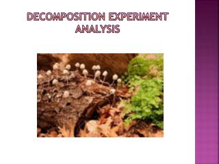 Decomposition Experiment Analysis