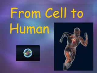 From Cell to Human      ….
