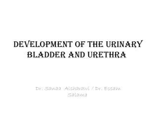Development of the urinary bladder and urethra