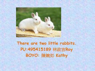 There are two little rabbits. PU:495415189  林政言 Roy BOYO:  陳婉如  Kathy
