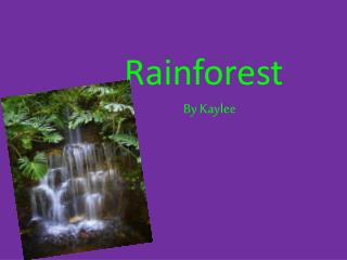 Rainforest By Kaylee