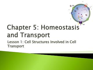 Chapter 5: Homeostasis and  Transport