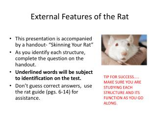External Features of the Rat