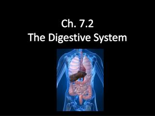 Ch. 7.2 The Digestive System