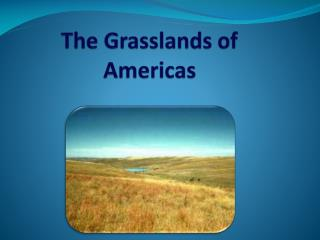 The Grasslands of Americas