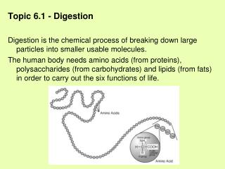Topic 6.1 - Digestion