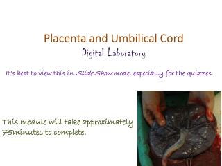 Placenta and Umbilical Cord Digital Laboratory