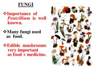 FUNGI Importance  of  Penicillium is  well known. Many fungi used as  food. E dible mushroom s