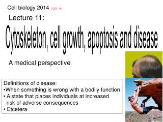Cytoskeleton, cell growth, apoptosis and disease