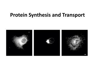 Protein Synthesis and Transport
