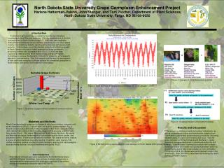 North Dakota State University Grape Germplasm Enhancement Project