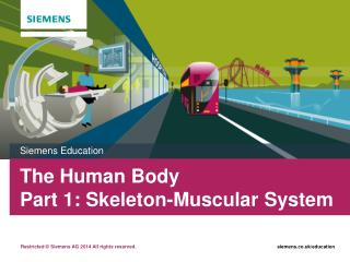 The Human Body  Part 1: Skeleton-Muscular System