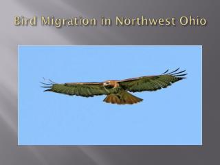 Bird Migration in Northwest Ohio