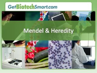 Mendel & Heredity