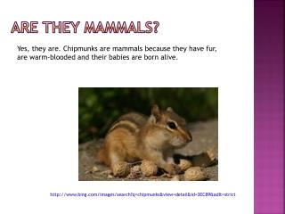 Are they mammals?