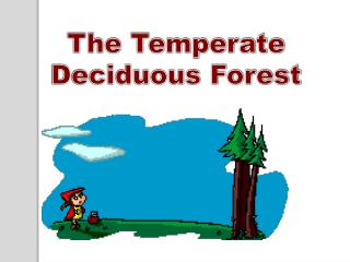 The Temperate Deciduous Forest