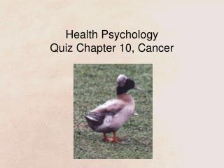Health Psychology Quiz Chapter 10, Cancer