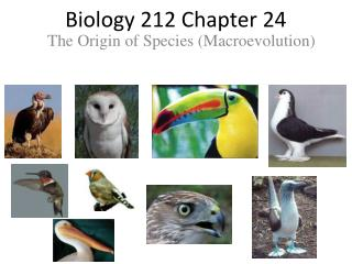 Biology 212 Chapter 24