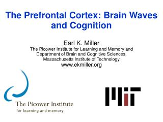 The Prefrontal Cortex: Brain  Waves  and Cognition Earl K. Miller
