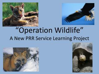 """Operation Wildlife"" A New PRR Service Learning Project"