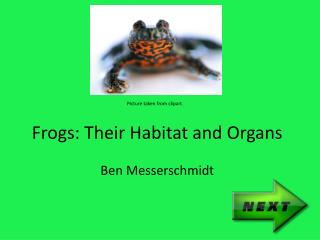 Frogs: Their Habitat and Organs