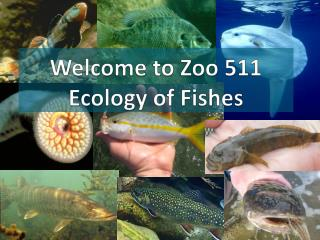Welcome to  Zoo 511 Ecology of Fishes