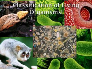 Classification  of Living  Organisms !