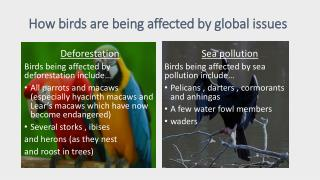 How birds are being affected by global issues