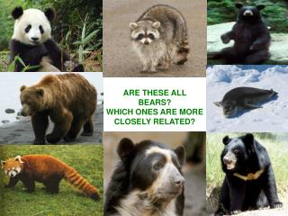 ARE THESE ALL BEARS? WHICH ONES ARE MORE CLOSELY RELATED?