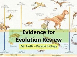 Evidence for Evolution Review