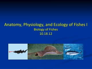 Anatomy, Physiology, and Ecology of  Fishes I Biology of Fishes 10.18.12