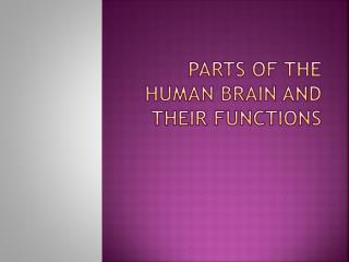 Parts of the Human Brain and their functions
