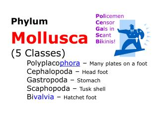Phylum Mollusca (5 Classes)  Polyplaco phora  –  Many plates on a foot Cephalopoda –  Head foot
