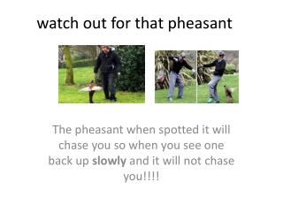 watch out for that pheasant