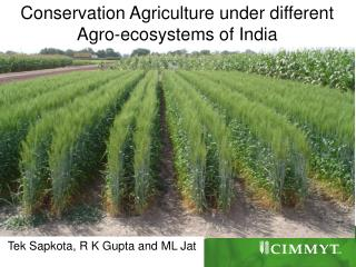 Conservation Agriculture under different Agro-ecosystems of India