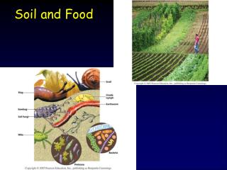 Soil and Food